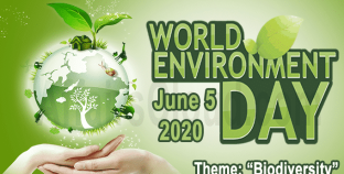 Biodiversity is the theme for World Environment Day 2020