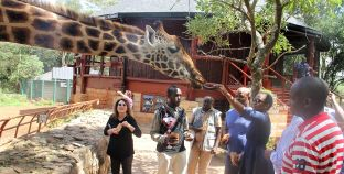 RCMRD Governing Council Chair Visits and Feeds Giraffes