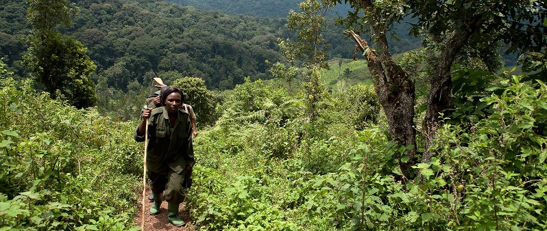 Uganda Bwindi Impenetrable Forest